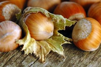 Beaked Hazelnut - Willis Orchard Company... can tolerate full shade and the pheasants will go crazy