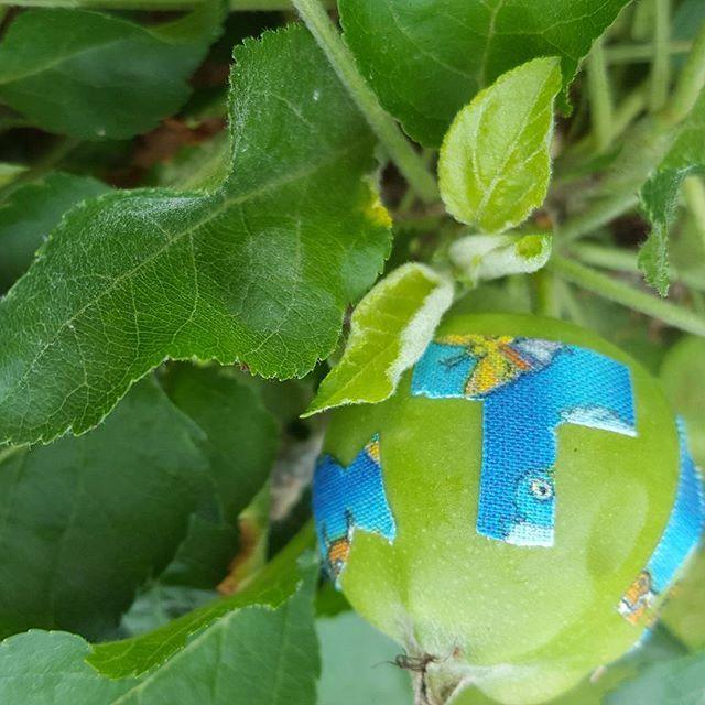 Noch kann ich von oben auf das Apfelbäumchen gucken. Aber ich bin mir sicher es wird wachsen, wie auch der Bub wachsen wird. Ein schönes Geschenk von der Patin zur Taufe, oder? Ist das bei euch auch üblich?  Und ich hab mich mal an Aufklebern auf Äpfeln v