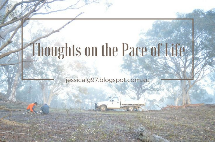 Apples of Gold: Thoughts on the Pace of Life.
