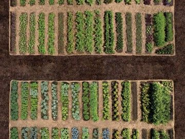 how to make raised garden rows