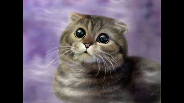Scottish Fold Cat and Kittens   History of the Scottish Charming Breed