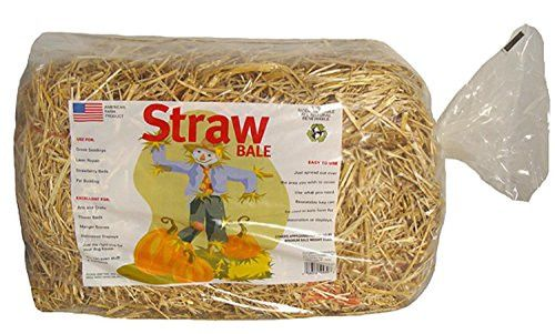 Felices Pascuas Collection Mini Straw Bale for Thanksgiving or Christmas Decorations - 125 Square Feet