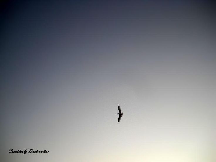 Fly away, you're as free as a bird. (One of my favourite pictures I've ever taken). Rachel McAdam. Nikon Coolpix.
