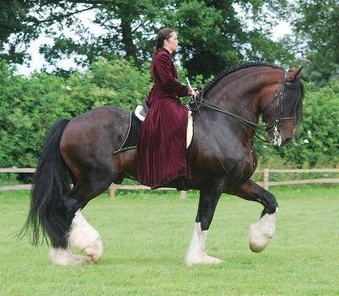 Love a draft horse. You never think about a horse this large doing dressage, but…