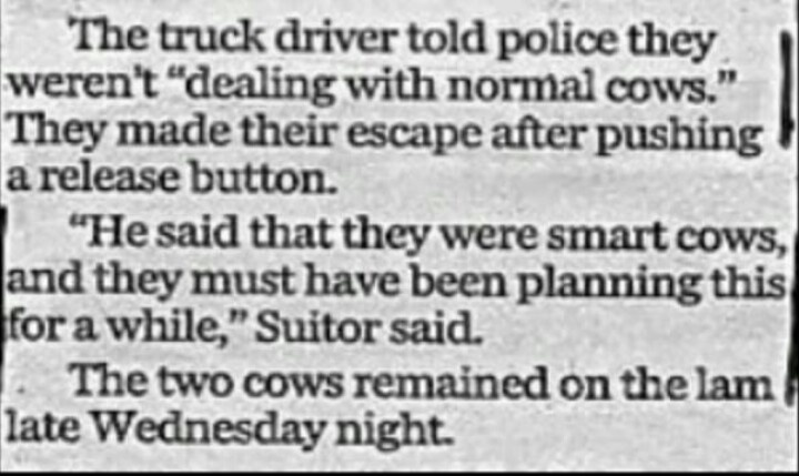Funny News Article