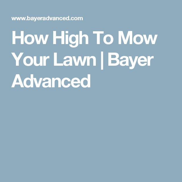 How High To Mow Your Lawn | Bayer Advanced