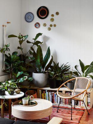 low sideways book shelf with plants