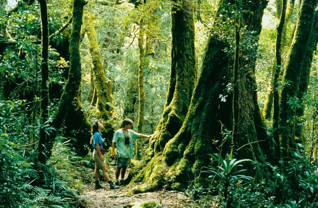 Shoretours - Brisbane - Tamborine to Lamington National Park