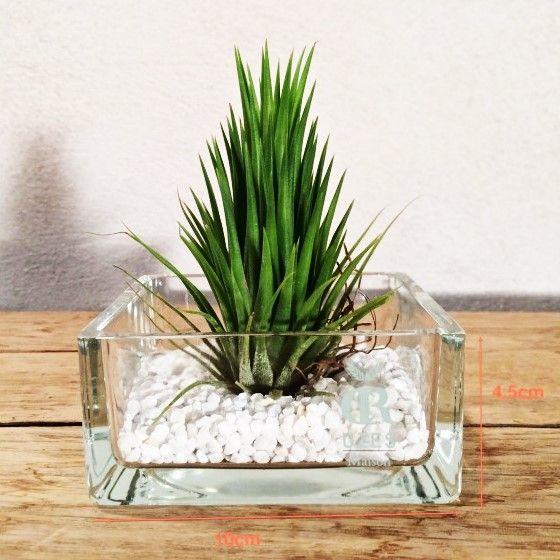 """Tillandsia """"Ionantha"""", vase plat carré et gravier blanc."""