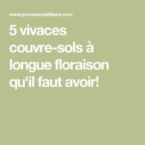 17 meilleures id es propos de vivaces couvre sol sur pinterest couvre plantes couvre sol et - Vivace couvre sol longue floraison ...
