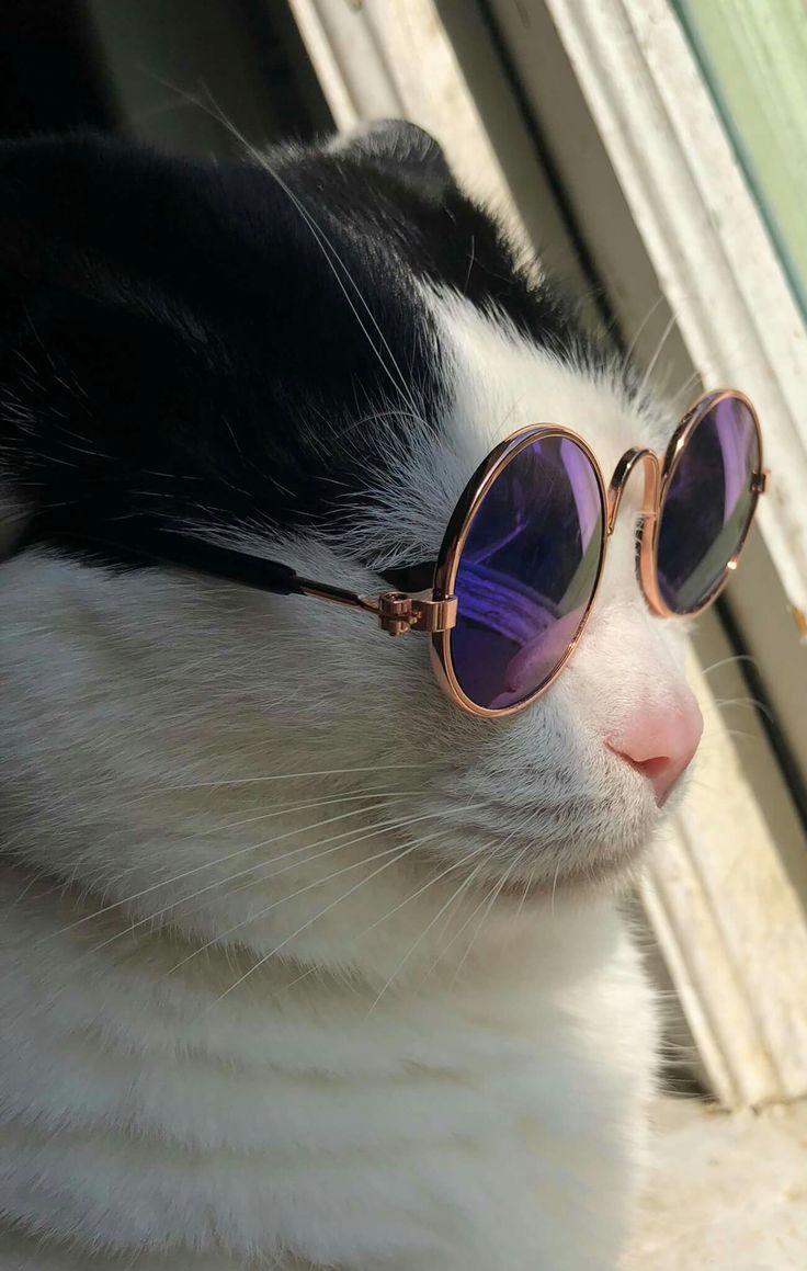 Uber Cool Pet Sunglasses Pet Sunglasses Cool Pets Cat Glasses