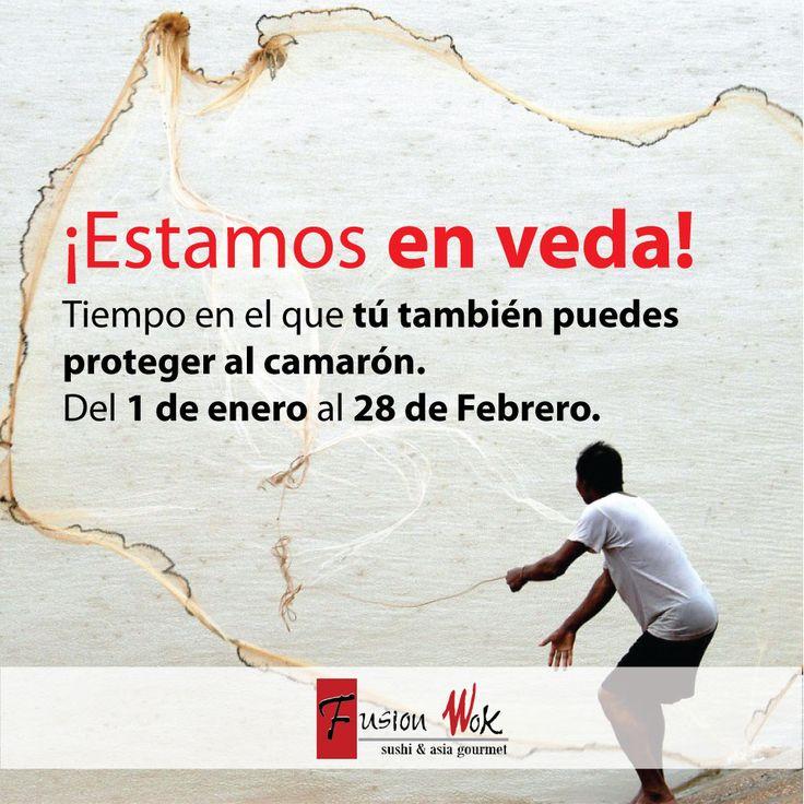 ¡Estamos en veda! El tiempo en el que tú también puedes proteger a los camarones y langostinos. Fusion Wok participa activamente en la Veda desde el 1 de enero al 28 de febrero, uniéndonos a los esfuerzos que la Autoridad Nacional de Acuicultura y Pesca (AUNAP) y a WWF-Colombia adelantan para sensibilizar y educar sobre la importancia de conservar este recurso.