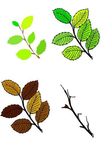 bilde løv fra fire årstider