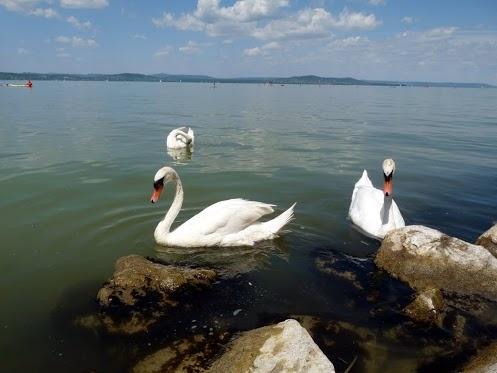 Lake Balaton in Hungary in 2010