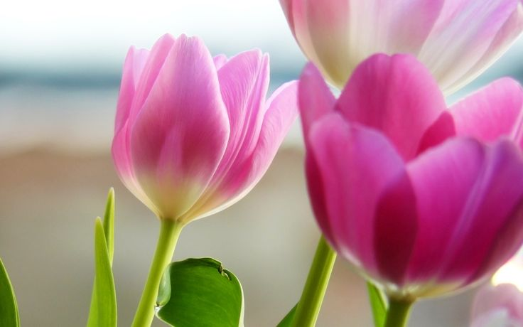 gather flowers wallpapers - photo #27
