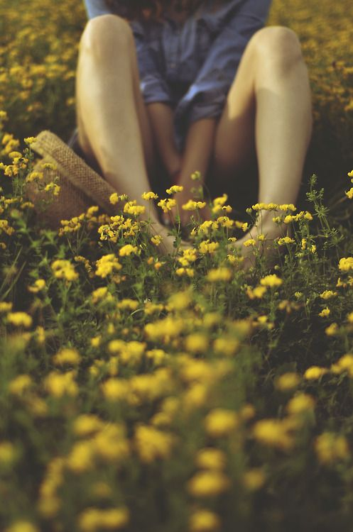 Sitting In A Field Of Yellow Flowers Flies On The Butter