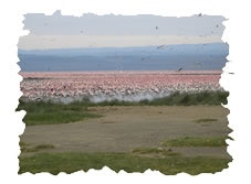 Kenya holiday safari tour to the Lake Nakuru National Park and the Masai Mara Game Reserve.  http://www.naturaltoursandsafaris.com/nairobi_kenya_safaris.php