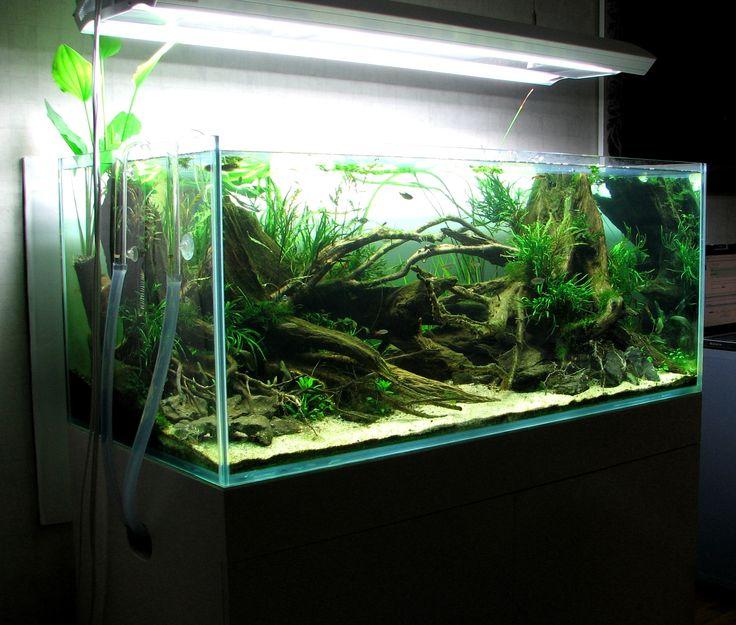 ... + images about Aquarium on Pinterest Fish aquariums, Plants and Aga
