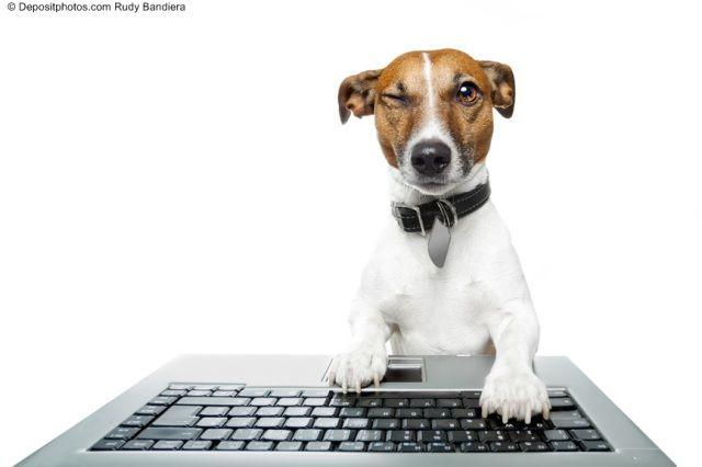 "Animalisti ""estremi"" da social network: codardi o saggi?"