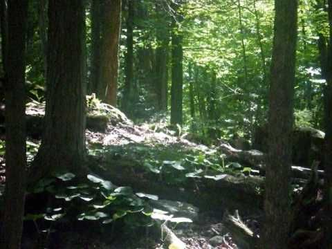 camp edgewood summer camp - Google Search