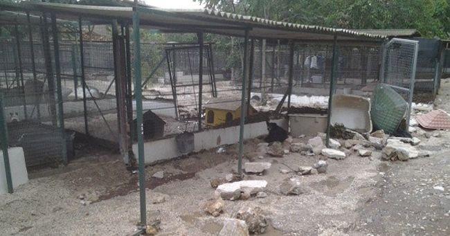 ALLUVIONE A TARANTO: 7 CANI MORTI NEL CANILE DI MARINA DI GINOSA INTERVENTO DEI VOLONTARI OIPA