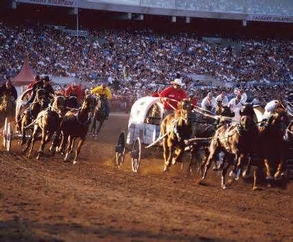 Calgary Stampede.  Chuck Wagon Races