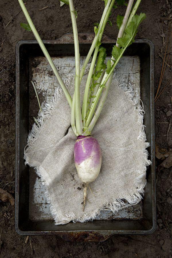 White Turnip  Libbie S...