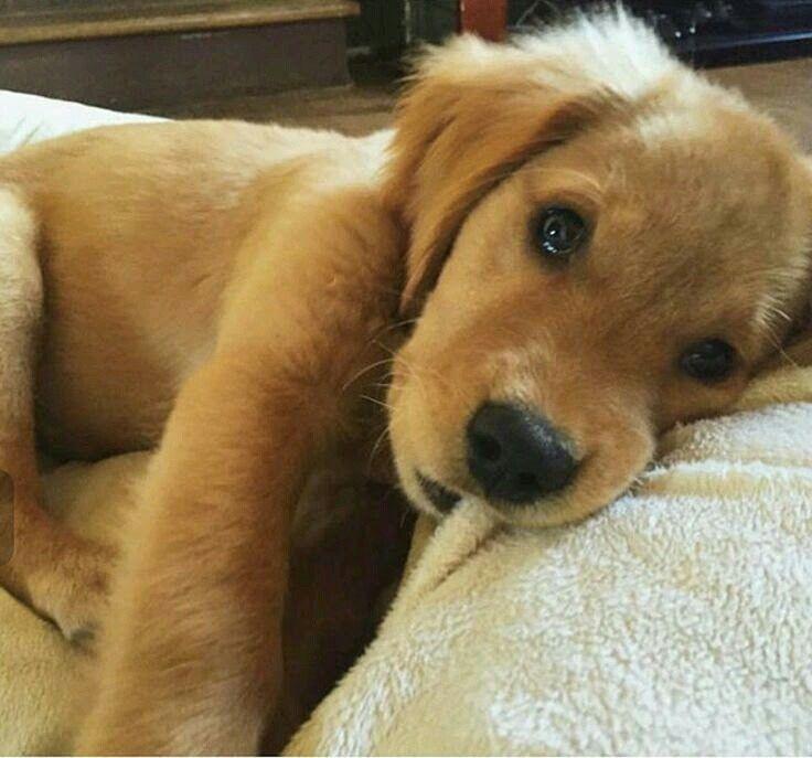 Puppy Snuggiess..:)..:)