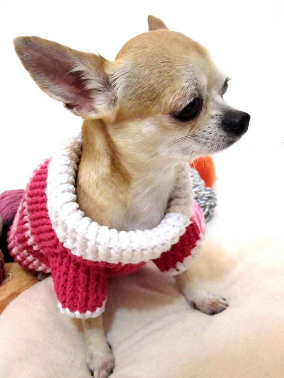 the 42 best images about dog sweaters on pinterest chihuahuas crochet dog sweater and dog coats. Black Bedroom Furniture Sets. Home Design Ideas