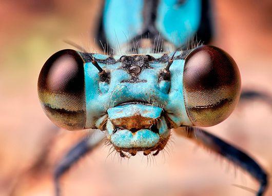 awesome: Thomas Shahan, Macrophotographi, Big Eyes, Macro Photography, Beauty Bugs, A Bugs Life, Insects Eyes, Portraits, Animal