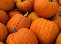 i'm just a bit obsessed with pumpkins: Pumpkin Recipes, Fall Pumpkin, Moist Pumpkin Breads, Pumpkin Breads Recipes, Fall Colors, Favorite Seasons, Squash Soup, Pumpkin Muffins, Favorite Recipes