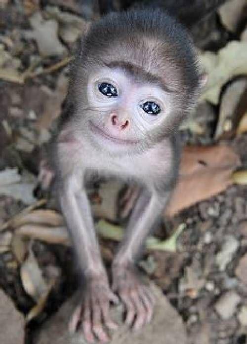Baby Capuchin Monkey - super cute