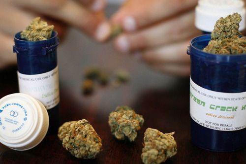 LAustralie autorise la culture de marijuana médicale...