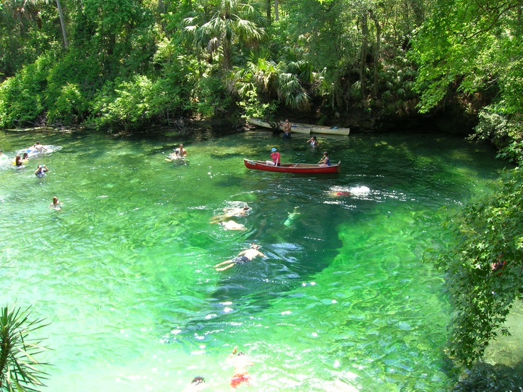42 Best Images About Florida Springs On Pinterest Peacocks Park In And Florida Springs