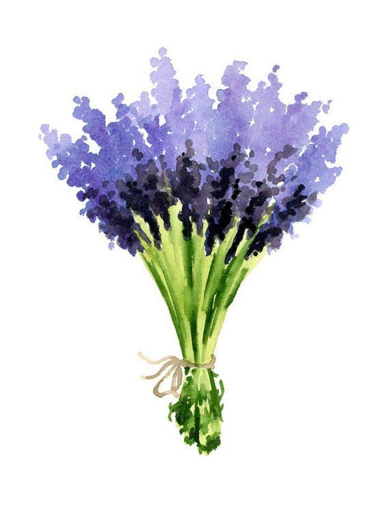 Lavender Art Print Lavender Flower Bouquet Wall Decor Floral