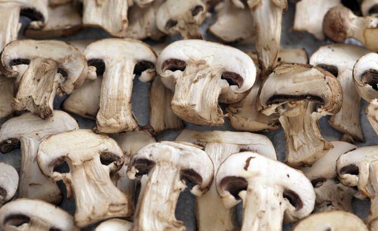 Speise-Pilze selber anbauen -  Wenn Sie Pilze selbst anbauen, können Sie die Delikatessen frisch und garantiert schadstofffrei genießen. Außerdem sind Pilz-Kulturen sehr pflegeleicht und ganzjährig möglich.