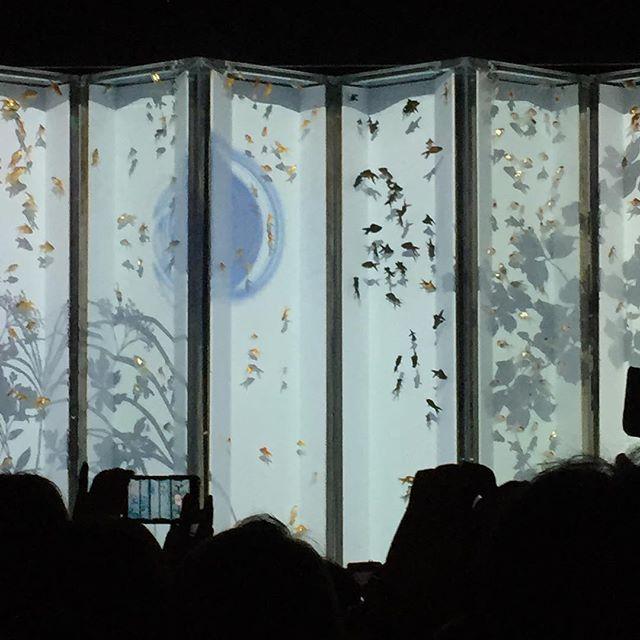 【daisuki_523】さんのInstagramをピンしています。 《幻想的💕映画、さくらんを思い出します💕 #金魚展 #日本橋#金魚#おさかな#魚#fish #goldfish #aquarium #アクアリウム展 #アクアリウム#びょうぶ #幻想》