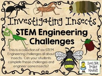STEM Engineering Challenges Pack ~ Investigating Insects~Set of Six!  $