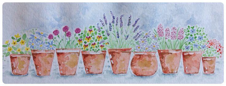 Row of flower pots Rachael dunn