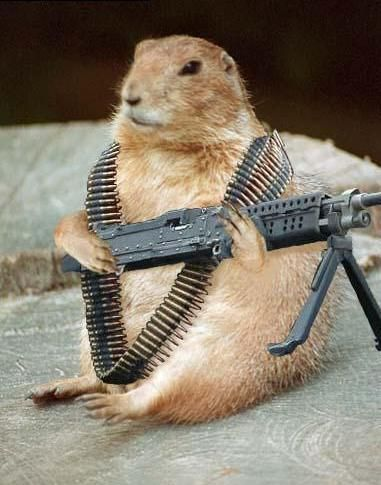 commando-chipmunk