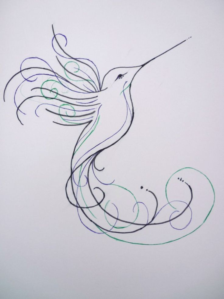 Hummingbird Drawings Step By Step: Best 25+ Hummingbird Drawing Ideas On Pinterest
