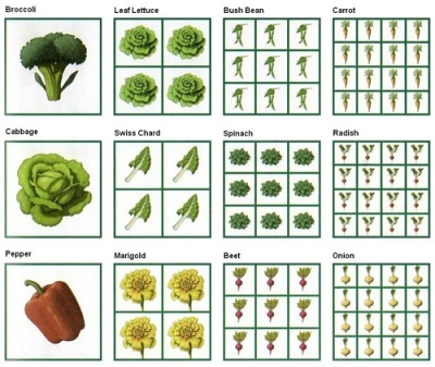 Square Foot Gardening in South Africa | Square Foot Garden Plant Spacing Guides