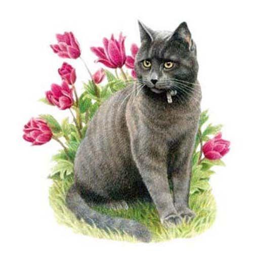 Серые кошки - фотографии котов и котят пород серого цвета