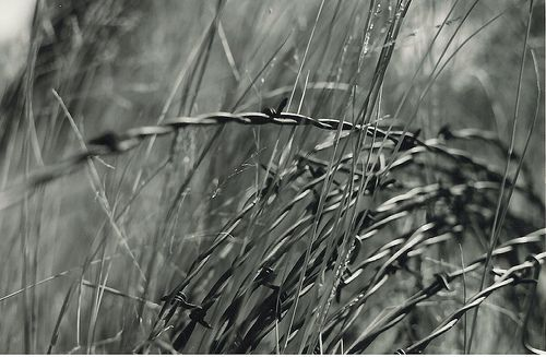depth of field/ country/ bobbed wire/ grass/ black and white photography/ film/ nature