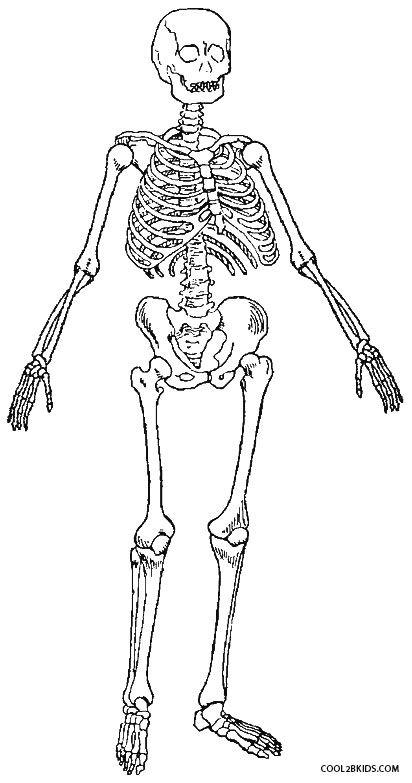 The 25+ best Human skeleton for kids ideas on Pinterest ...