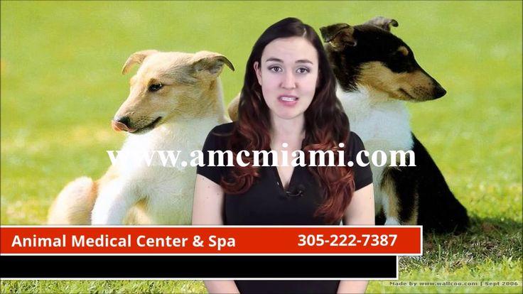 Veterinarian in southwest miami FL