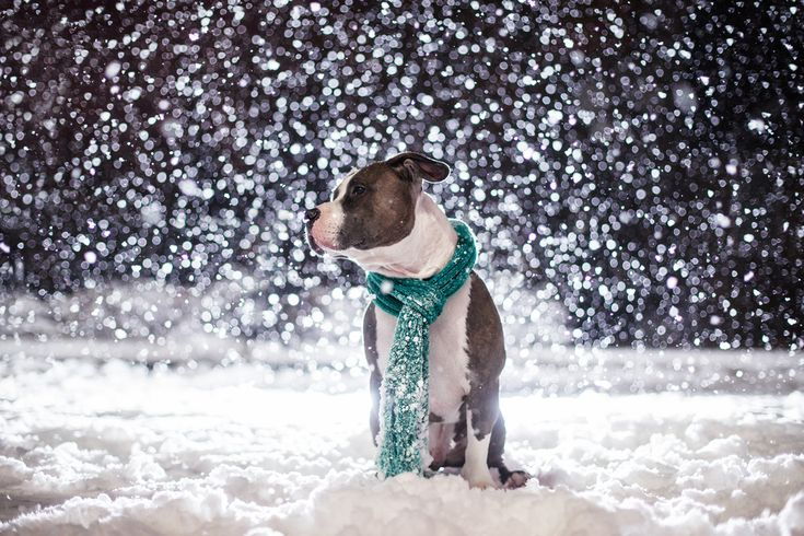 Dog Breath Photography