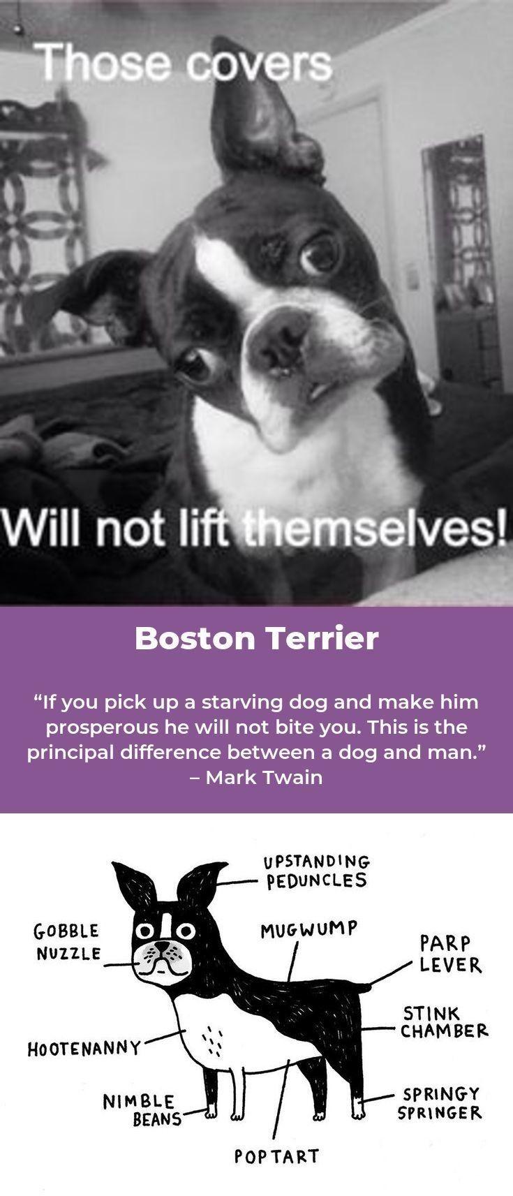 BOSTON TERRIER Spoiled Rotten FRIDGE MAGNET New DOG