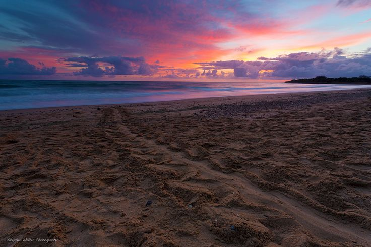 Turtle tracks into the sunrise at Mon Repos. Photo by Stephen Waller Photography - Images from Australia