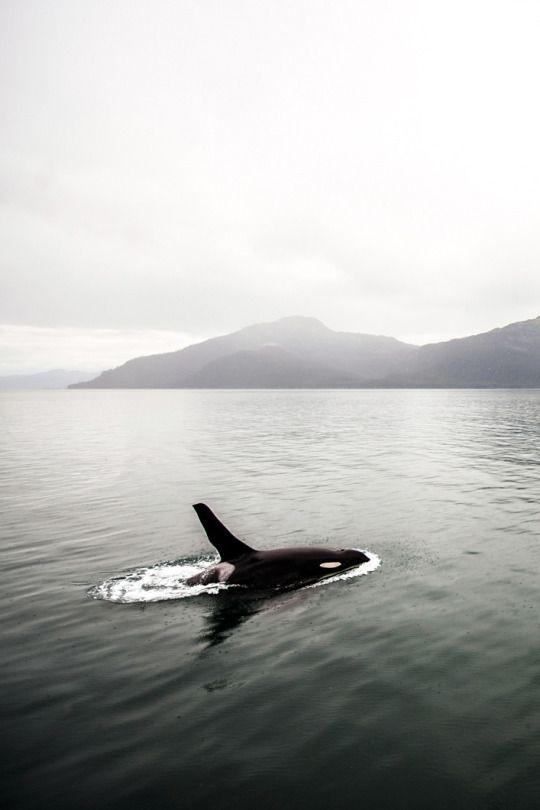 Navid Baraty | Valdez, Alaska